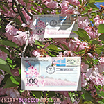 Cherry Blossoms First Day of Issue Envelope and Stamp Set