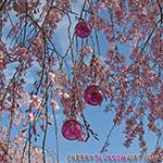 Cherry Blossom Glass Balls
