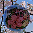 The Official 2016 National Cherry Blossom Festival Ornament